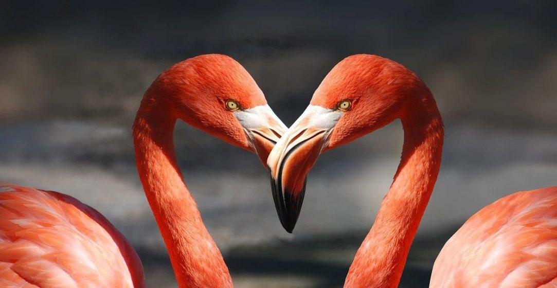 Jak powinien wyglądać związek Tak mało wiemy o miłości